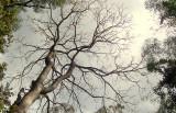 Drevesa bi lahko proizvajala električno energijo