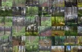 Gozdovi EU bolani in podhranjeni