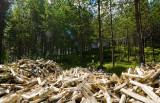 Kako trajnosten je les v resnici?
