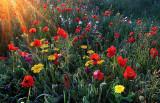 Rurbanisti napadajo z divje cvetličnimi bombami
