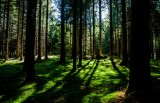 Kje je Slovenija po deležu energije iz obnovljivih virov?