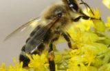 Slovenci in čebele