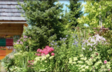 Medovite rastline