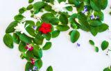 Rastline nas lahko rešijo pred propadom