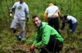 Sajenje medovitih dreves v Betnavskem gozdu