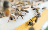 Je čebelarjenje donosen posel?