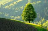 Slovenija je 96-odstotno zelena